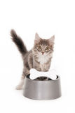 Kitten at a dog's bowl Royalty Free Stock Photography