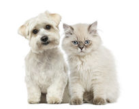 Kitten and dog. Sitting together and looking at the camera Stock Photo