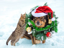 Kitten and dog wearing christmas wreath and Santa hat Stock Photography