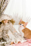 Kitten and doll. Six weeks old kitten with an antique doll Stock Image