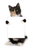Kitten With doméstica de cabelos compridos adorável uma cara da separação Fotografia de Stock Royalty Free