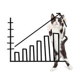 Kitten Drawing Increasing Sales Chart. Cute kitten standing up and drawing a bar chart showing an increase in sales Royalty Free Stock Photo