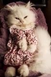Kitten in a dress Stock Image