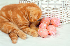Kitten and Easter eggs. Little kitten playing with Easter eggs Royalty Free Stock Image