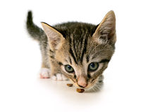 Kitten eating Royalty Free Stock Image