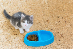 Kitten is eating dry food from a plate Royalty Free Stock Photo
