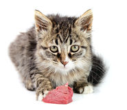 Kitten eating fresh meat Stock Photography