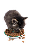 Kitten eating hard food Stock Photo