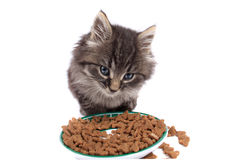 Kitten eating hard food Stock Images