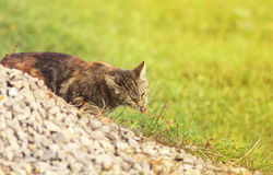 Kitten eating a juicy green grass in the garden in summer Royalty Free Stock Photos
