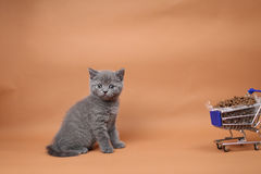 Kitten eating from a shopping cart with pet food Stock Photo