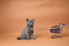 Kitten eating from a shopping cart with pet food Royalty Free Stock Image