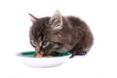 Kitten eating soft food Royalty Free Stock Images