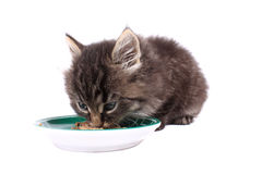 Kitten eating soft food Royalty Free Stock Photos