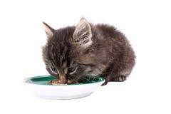 Kitten eating soft food Royalty Free Stock Photos
