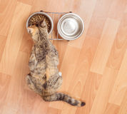 Kitten eats from a bowl, top view Royalty Free Stock Photos
