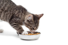 Kitten eats a dry feed. The striped kitten eats a dry feed, is isolated on a white background Royalty Free Stock Images