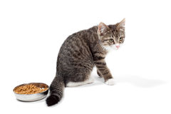 Kitten eats a dry feed. The striped kitten eats a dry feed, is isolated on a white background Stock Photo