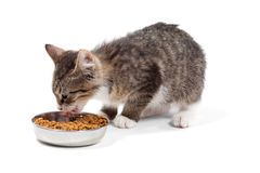 Kitten eats a dry feed. The striped kitten eats a dry feed, is isolated on a white background Royalty Free Stock Image