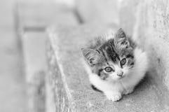 Kitten in Ecuador Royalty Free Stock Image