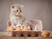 Kitten and eggs. On brown background Royalty Free Stock Photo