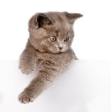 Kitten with empty board. isolated on white background Stock Photography