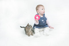 Kitten enjoying mirabelles company Stock Image