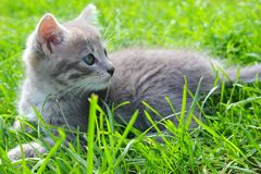 Kitten Enjoying Summer Foto de Stock Royalty Free