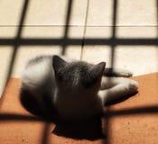 A kitten enjoying sunshine stock photo