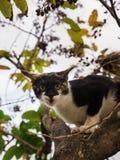 Kitten Escape Another Cat upp trädet arkivfoton