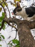 Kitten Escape Another Cat upp trädet arkivbild