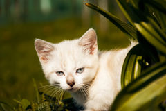 Kitten examines green grass Stock Photo