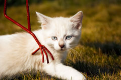Kitten examines green grass Stock Photography