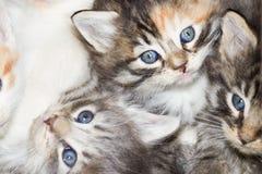 Kitten eyes Royalty Free Stock Images