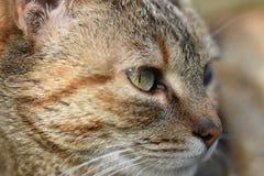 Kitten eyes. Kkitten in the garden looking cool royalty free stock images