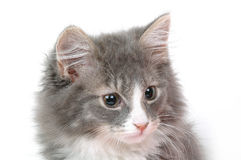 Kitten face. Close-up Royalty Free Stock Images