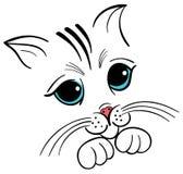 Kitten face drawing. A illustration of kitten face Stock Photo