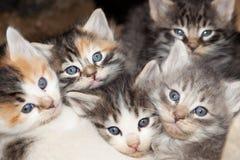 Kitten Faces Immagini Stock Libere da Diritti