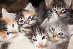 Kitten Faces Royalty Free Stock Images