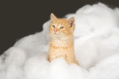 Kitten and fake snow Royalty Free Stock Image