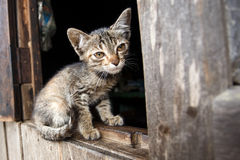 Kitten in Falam, Myanmar (Burma) Royalty Free Stock Image