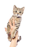 Kitten in female hands Stock Image