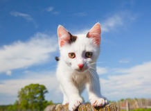Kitten on a fence Royalty Free Stock Images