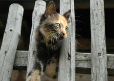 Kitten on the fence. Little kitten on the wood fence Royalty Free Stock Images