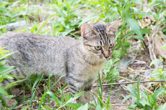 Kitten of feral cat Stock Photo