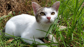 Kitten at Field Royalty Free Stock Image