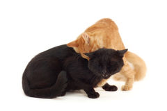 Kitten fights with old black cat Royalty Free Stock Photos