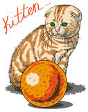 Kitten Stock Images