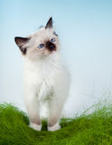 Kitten in first grass Stock Image