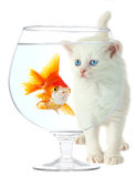 Kitten and fish Stock Photos